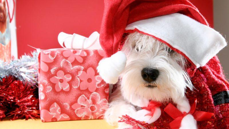 7 cuidados a tener en cuenta con los perros en Navidad